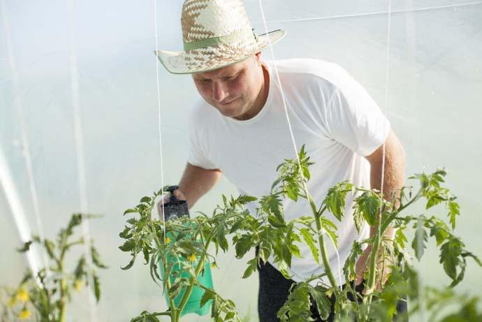 Опрыскивание вегетирующих огородных растений не только увеличивает количество завязей